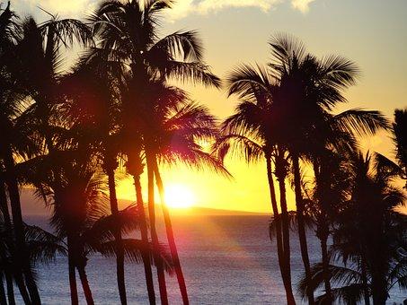 Beach, Water, Ocean, Sea, Tree, Palm, Palm Tree