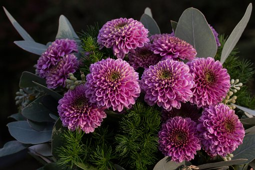 Flowers, Nature, Plant, Autumn, Aster, Santini Aster