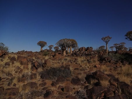 Namibia, Quiver Tree Forest, Landscape, Nature, African