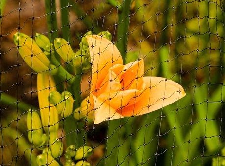 Daylily, Deer Netting, Pest Control, Rabbit Barrier