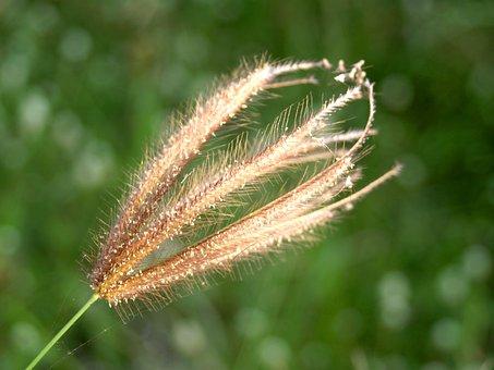 Flower, Pressed, Wild, Stem, Leaf, Autumn, Garden