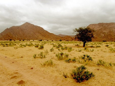 Desert, Hill, Rocks, Tree, Lonely, Barren, Bare