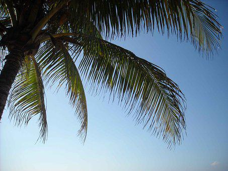 Island, Palm Tree, Jamaica, Palm, Beach, Sea, Sky, Tree