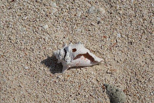 Shell, Sand, White, Summer, Nature, Sea, Beach