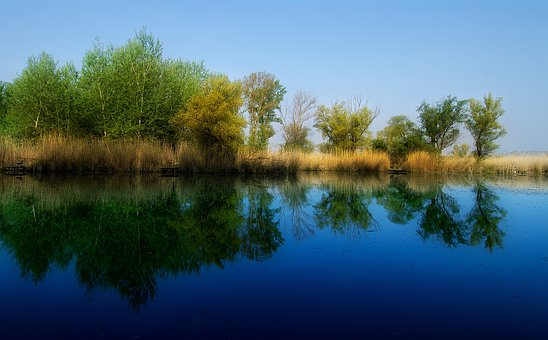 Reflection, Spring, Dead Marcal