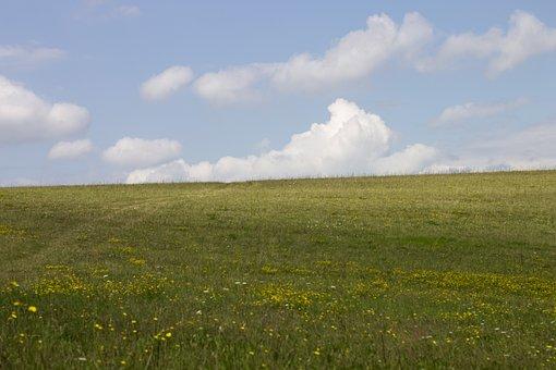 Meadow, Autumn, Gaensebluemche, Grass, Nature, Flowers