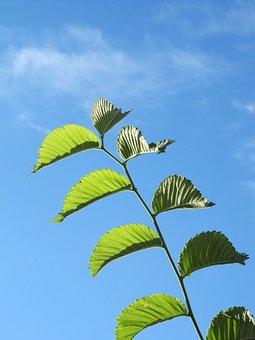 Fplanze, Leaves, Green, Blue, Sky