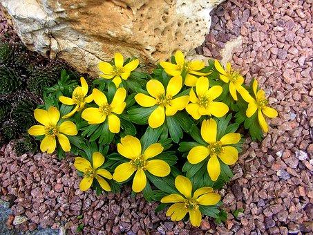 Stone, Yellow Spring Flowers, Jewel