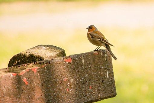 Bird, Nature, Fauna, Nagykanizsa