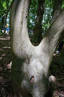 Tree, Trunk, V Shape, Green, Nature, Park, Tree Bark