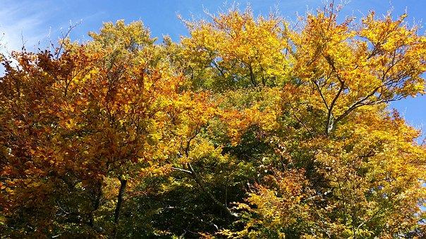 Treignac, Nature, Landscape, Mount Gargan