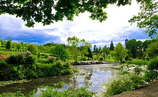Nature, Pond, Plants, Sky, Wojsławice