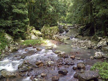 Creek, Rainforest, Flowing, Landscape, Nature, Water