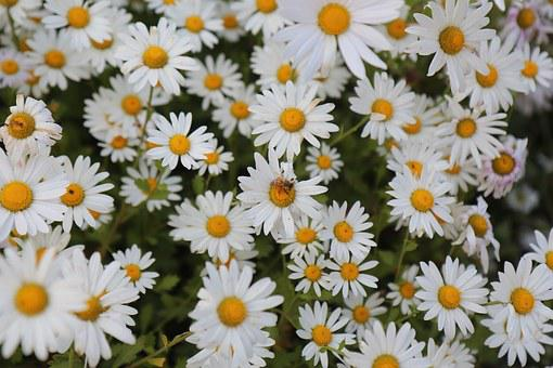 Flowers, Gujeolcho, Nature, Autumn, Plants