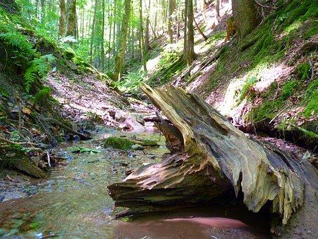 Water, Bach Root, Wood, Bank