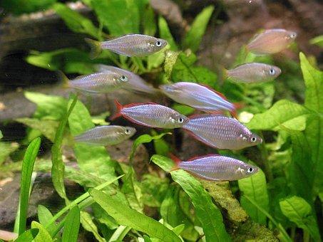 Fish, Plants, Aquarium, Fishes, Animals, Fauna