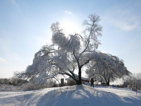Sunshine, Snow And Ice, Hanging Tree