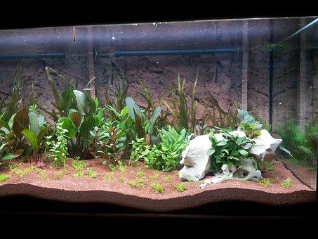 Aquarium, Aquatic Plants, Terrarium