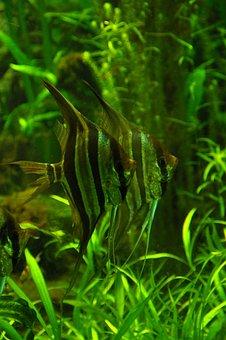 Fish, Green, Water, Exotarium