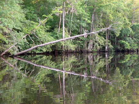 Lynches, River, Trees, Water, Wood, Green River