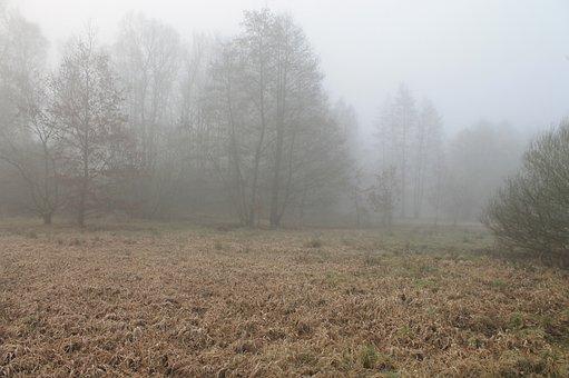 Forest, Fog, Foggy, Haze, Herbsnebel, Autumn Mood