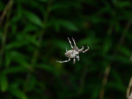 Spider, Thr, With, Flash, Twilight, Macro