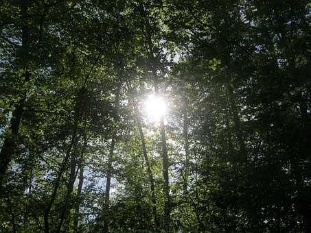 Forest, Nature, Trees, Crowns, Background, Sunlight