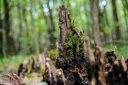 Forest, Korzeķ, Figure, Tree, Moss