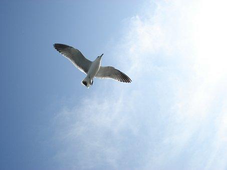 Autumn Sky, Seagull, Muuido, Wing, Flight, Sky, New