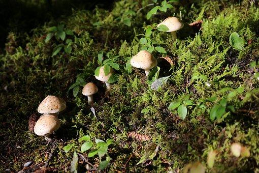 Paddestoel, Mushroom, Wood, Forest