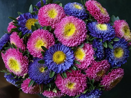 Flowers, Bouquet, Blue, Purple, Floral, Flora, Blossom