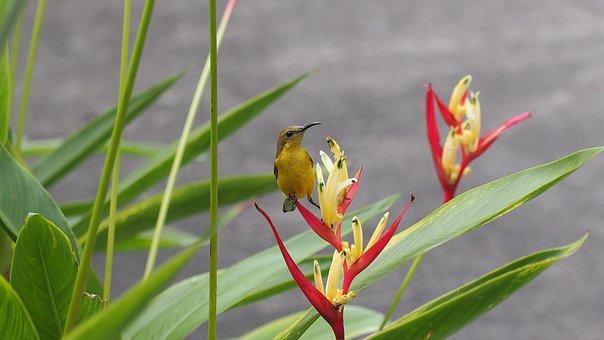 Sun Bird, Bird, Sun, Natural, Wild