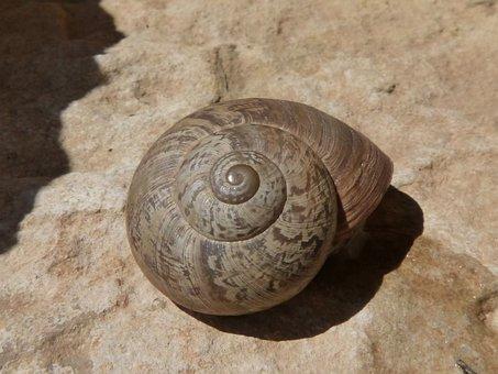 Eobania Vermiculata, Snail, Choneta, Chanet, Chona