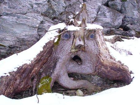 Root Face, Baumstumpfm Face, Tree, Winter