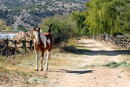 Horse, Path, Nature, Ranch, Pony, Equine