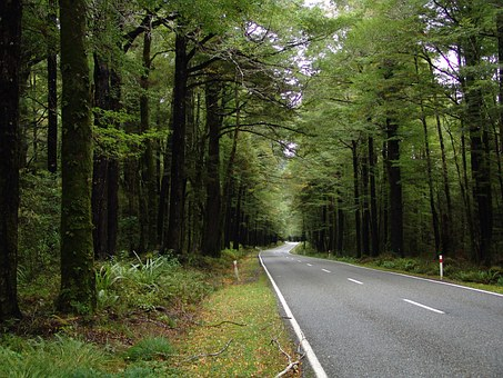 Road, Forest, Highway, Street, Nature, Ecology