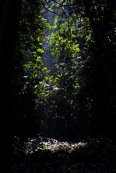 Jungle, Gorumara, Forest, Trees, Leaves, Dark, Nature