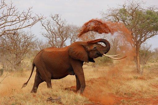 Elephant, Africa, African Elephant, Kenya, Tsavo