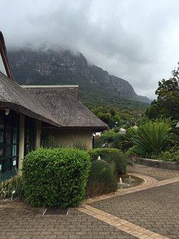 Kirstenbosch, Gardens, Ca, Cape, Town, Botanical
