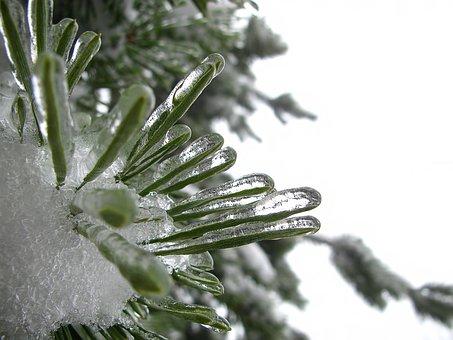 Winter, Tree, Branch, Bough, Ice, Frozen, Nature, Macro