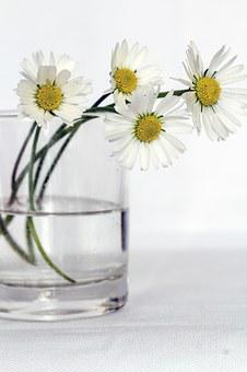 Flowers, Still Life, Daisy, Flower Vase, Close Up
