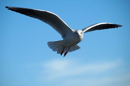 Gull, Bird, Tern, Bird Flight, Flying, Wing, Freedom