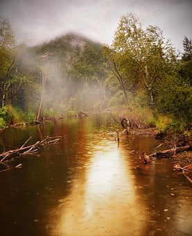 Forest, Pond, Water, Rain, Summer, Beauty, Fog