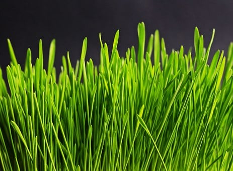 Grass, Green, Nature, Plant, Meadow, Grasses