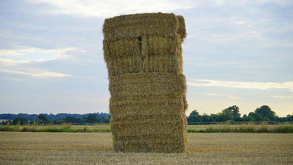 Hay, Field, Farm, Nature, Summer, Agriculture
