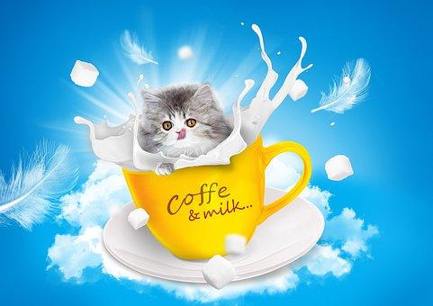 Cat, Milk, Teacup, Persian, Language, Sugar, Sky, Blue