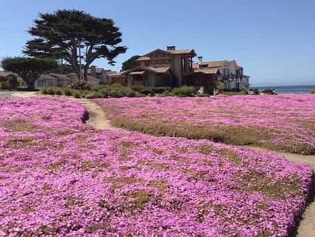 Magic Carpet, Monterey Pennisula, Pacific Grove, Ca