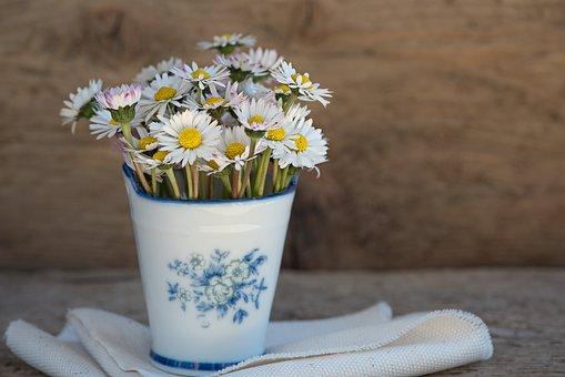 Daisy, Pointed Flower, Flower, White, Vase, Vessel