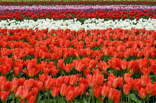 Lips, Flowers, Fish Eye, Red, Purple, Field, Farm