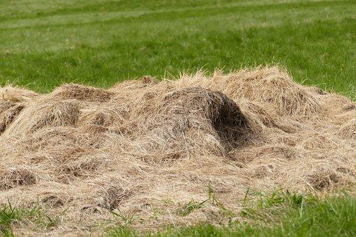 Haystack, Meadow, Hay, Pile, Pet Food, Romantic